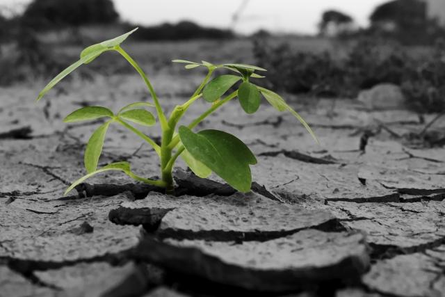 乾燥した大地から植物